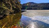 Da cuo national forest park — Stock Photo