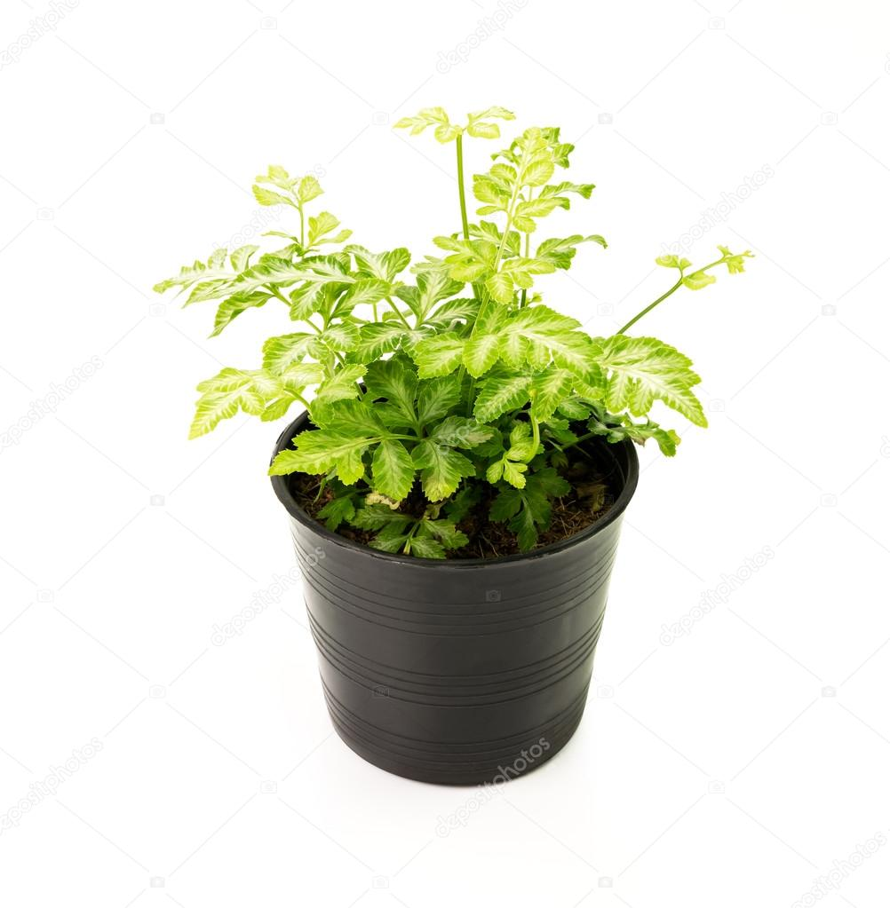在房子植物盆栽孤立在白色背景– 图库图片