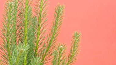 Pine Branches, Swaying Branches, Swaying Pine Tree, Needles, on Red Background, Chromakey, Chroma Key, Alfa — Stock Video