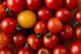Delicious fresh, vegan, red and yellow ripe cherry tomatoes. — Stock Photo