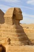 Perfil da grande Esfinge, Giza, Egito — Fotografia Stock