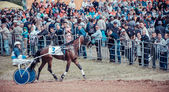 Trotting racing in Naberezhnye Chelny, Republic of Tatarstan, Russia Holiday Sabantuy 2015 — Stock Photo