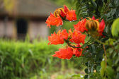 Red dropical flower in a bush after rain — Stock Photo