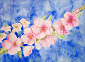 Branch of cherry blossoms against a blue sky. — Stock Photo