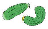 Two organic cucumbers closeup — Stock Vector