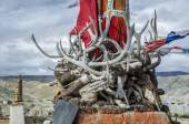 Horns, tusks and antlers of ancient dead animals, Upper Mustang, Nepal — Stock Photo