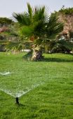 Sprayed water drops on a poured lawn and the distant palm tree — Stock Photo