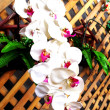 Beautiful fake orchids flowers bouquet on wooden wall — Stock Photo #78577758