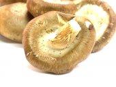 Mushrooms and raw mushrooms isolated on white background — Stock Photo