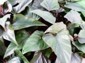 Frisches Grün verlassen Textur Natur — Stockfoto