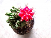 Cactus in pot on background — Stock Photo
