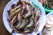 Shrimp in plastic pots — Stock Photo