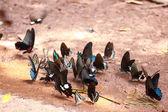 The beautiful butterfly Da Ma National Park - Vietnam — Stock Photo