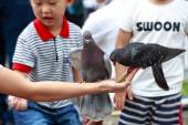 Hochiminh City, Vietnam - July 14, 2015: feeding pigeons on hands of a baby boy on the streets of Saigon — Stock Photo