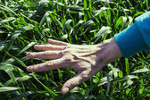 The nature of the hand on the grass — Stock Photo