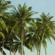 A lot of green palm trees on the background of the blue sky. Tropical. — Stock Photo #79004618