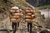 Porters transporting chicken in cages — Stock Photo