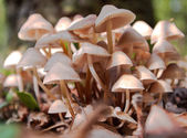 Toadstool  in the forest. — Stock Photo
