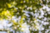 Closeup of blur tree and bokeh — Stock Photo