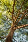 Blur under the tree — Stock Photo