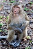 Cute monkey with beautiful eyes. — Stock Photo