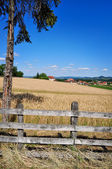 Rural landscape and fields of wheat — Stock Photo