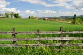 Countryside landcape and lush grass — Stock Photo