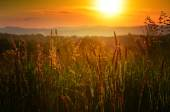 Golden sunset on the meadow — Stock Photo