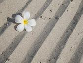 Sand on the beach 2 — Stock Photo