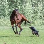 Horse — Stock Photo #79501310