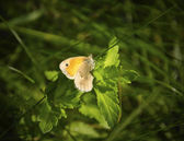 The butterfly is basked in the sun — Stock Photo