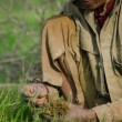 Постер, плакат: Male rice worker crouches and grips new green rice shoots to prepare for transplanting to a new field