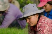 KANDAL PROVINCE, CAMBODIA - DECEMBER 31, 2013 - Female Rice Worker profile as she tends her field — Stock Photo