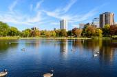 Loring Park in Autumn 3 — Stock Photo
