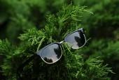 Reflecting retro sunglasses on green fur-tree. — Stock Photo