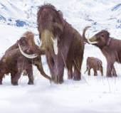 Wooly Mammoth Ice Age Scene — Stock Photo