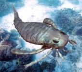 Eurypterus Scanning Seafloor — Fotografia Stock