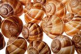Shells of escargot against white background,close up — Stock Photo