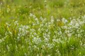 Germany, Bavaria, neglected grassland, grasses and wildflowers — Stock Photo