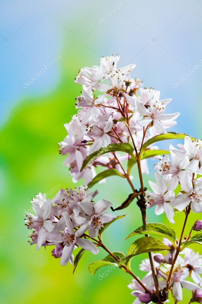 fleurs de deutzia rose — photo #84986154