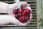 Italia, Toscana, Magliano, cerca de cerezas bajo el agua para lavarse las manos de la mujer — Foto de Stock