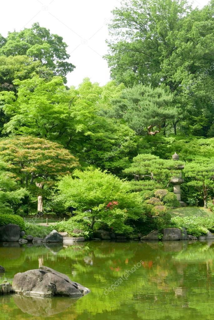 plantas verdes estanque con reflexin en el jardn japons zen u foto de stock