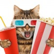 Cat watching a movie — Stock Photo #80418924