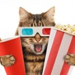 Cat watching a movie — Stock Photo #80418954