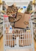 在商店里逗猫 — 图库照片