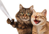 Funny cats - Self picture. — Stock Photo