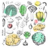 Set of vegetables and herbs — Stok Vektör