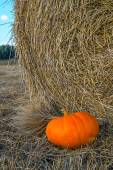 Pumpkin in the hay — Stock Photo