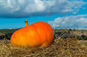 Pumpkin on hay — Stock Photo