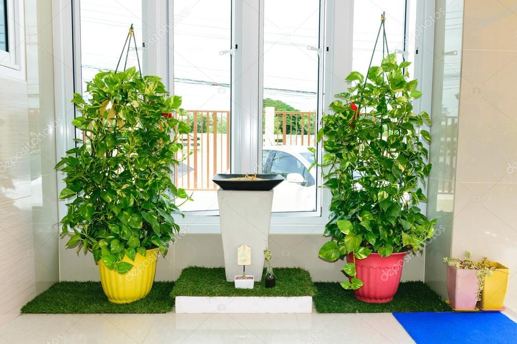 Etaphop 82137294 - Plantas decorativas de interior ...